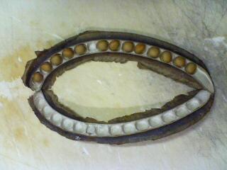 シカクマメの種