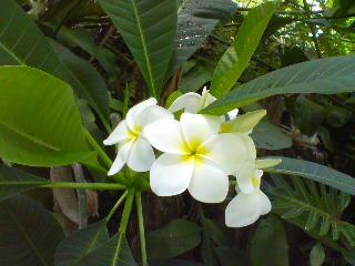 花の季節その1