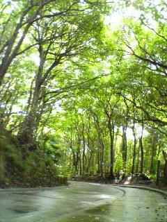 桑の木山にて昼休み