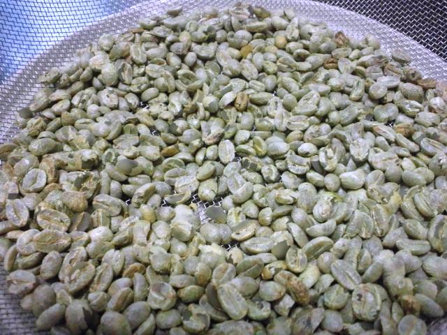 コーヒー豆作業